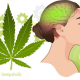 Can You Keep Your Brain Healthy With Hemp